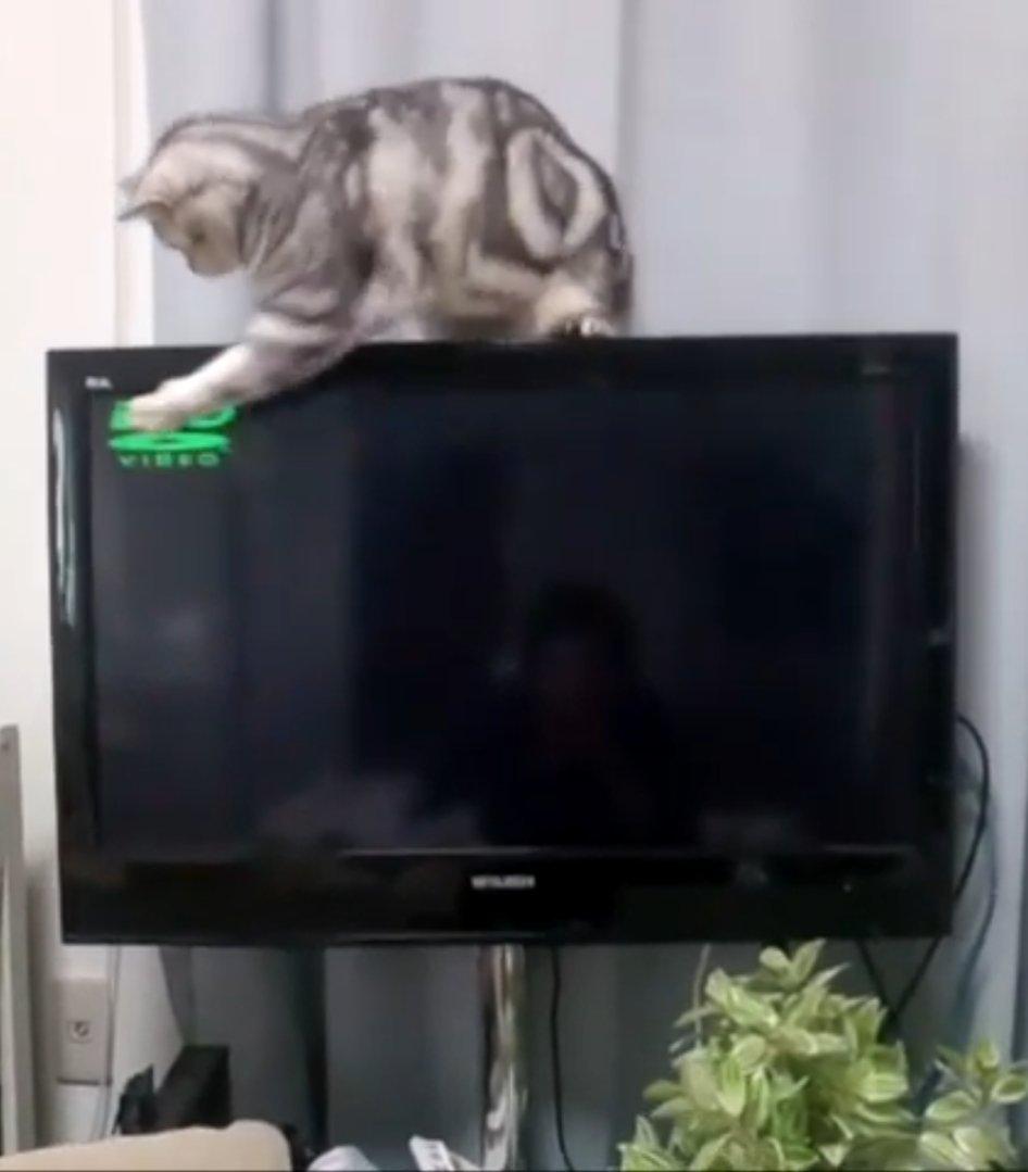 https://t.co/nIjc5X8qeu 令和猫ちゃんねる。 猫、DVDに興味もつ。 良かったら見てね。 ちゃま(猫)のショートムービー。  ちゃま8歳 マンチカンだが足が長い オス。  #猫 #ねこ #猫好きさんと繋がりたい #ねこのきもち #猫好き  #にゃんこ https://t.co/fLWmmtAfM6