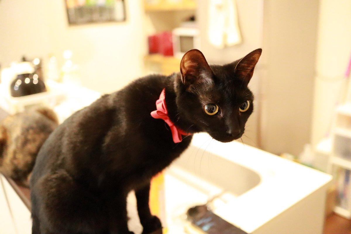獲物を狙うハンター・ナナ #猫画像 #猫 #ねこ #ネコ #cat #cats #保護猫 #多頭飼い #ねこのきもち #猫好きさんと繋がりたい #猫のいる暮らし #猫のいる幸せ https://t.co/L4P7N8rC8u