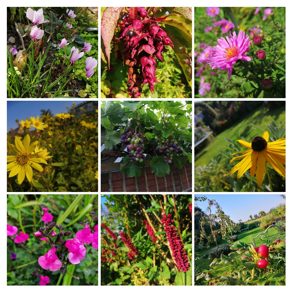 Such a beautiful day for gardening... Wet and windy forecast from mid week... #Eastyorkshire #autumn https://t.co/ql1USWlPiW