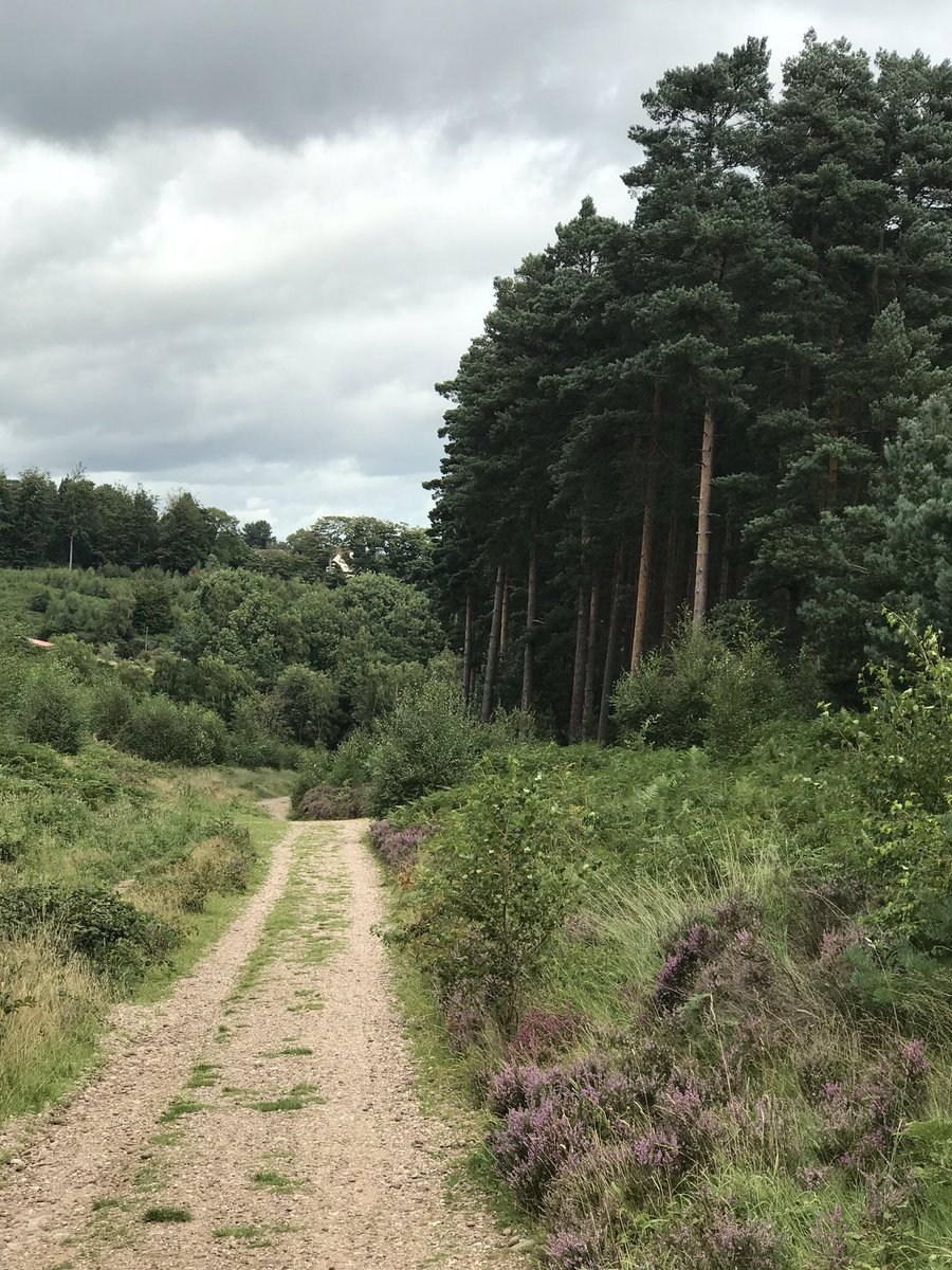 @GaryBarlow the great outdoors has helped 😊🌞#cannockchase https://t.co/d6HY0juKJY