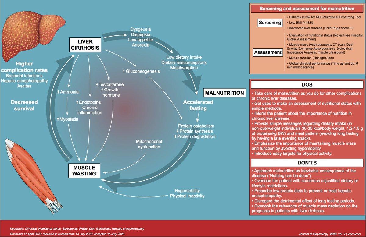 #Nutrición en los pacientes con #cirrosis: lo que se debe y lo que no se debe hacer 👉 https://t.co/79QJRtHzp9 @JHepatology https://t.co/XlIR34dyYe