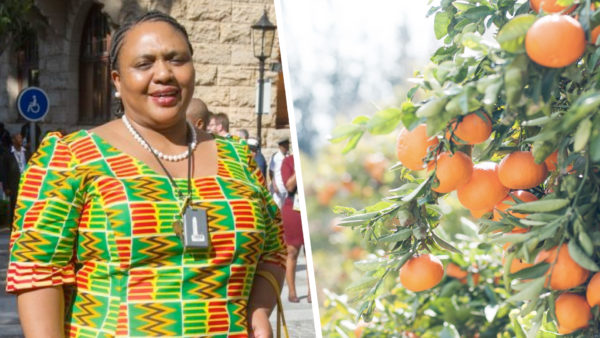 Thoko Didiza and US ambassador Lana Marks announces technical task team that will facilitate American market access for agricultural products. https://t.co/I5MDI8l8lt https://t.co/IiF3a6ejDJ