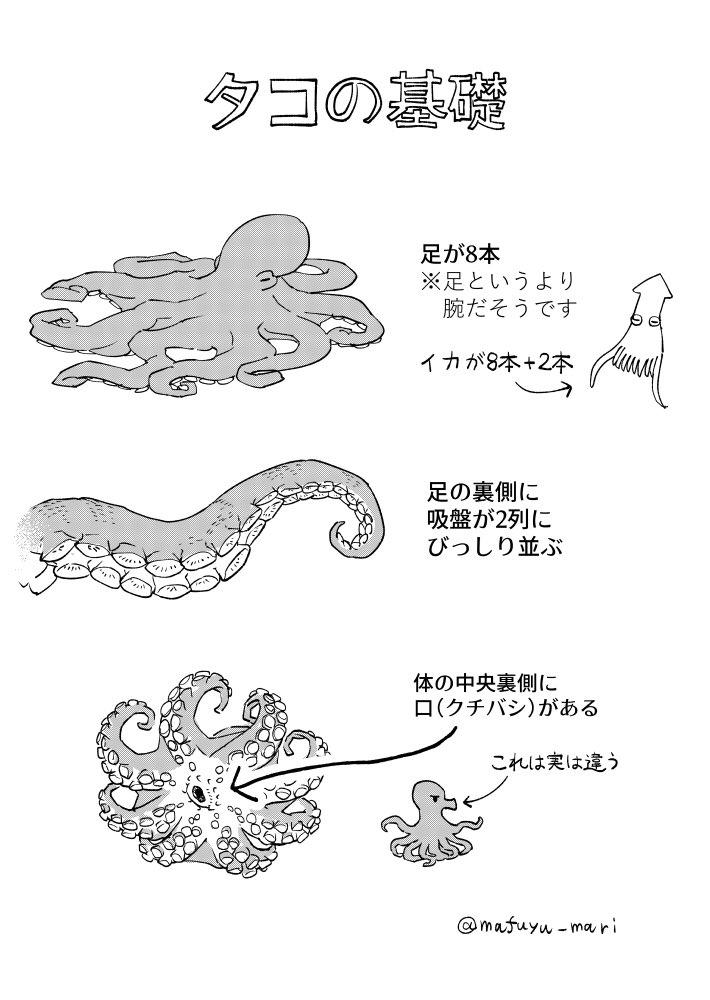 タコの描き方