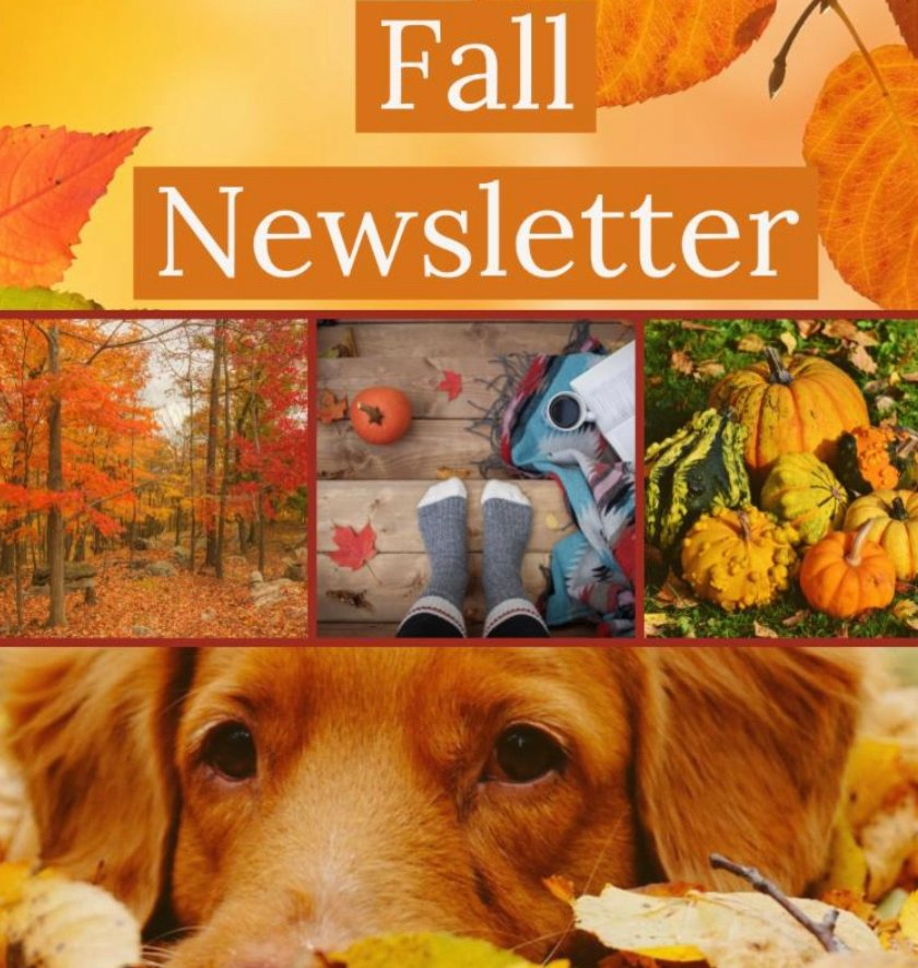 The fall newsletter has been released! go to https://t.co/BcHrK2sDJu to sign up to get the newsletter & more. #fallnewsletter #happyfall #pumpkins #leaves #apples https://t.co/7t3h32uucR