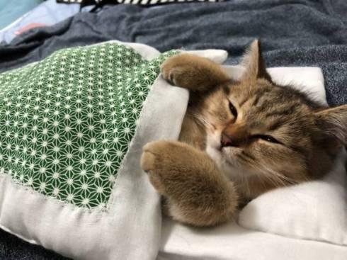 やっぱりお布団は最高だニャ! 飼い主さんにもらったお布団で眠る子ネコがかわいすぎる  @itm_nlabより