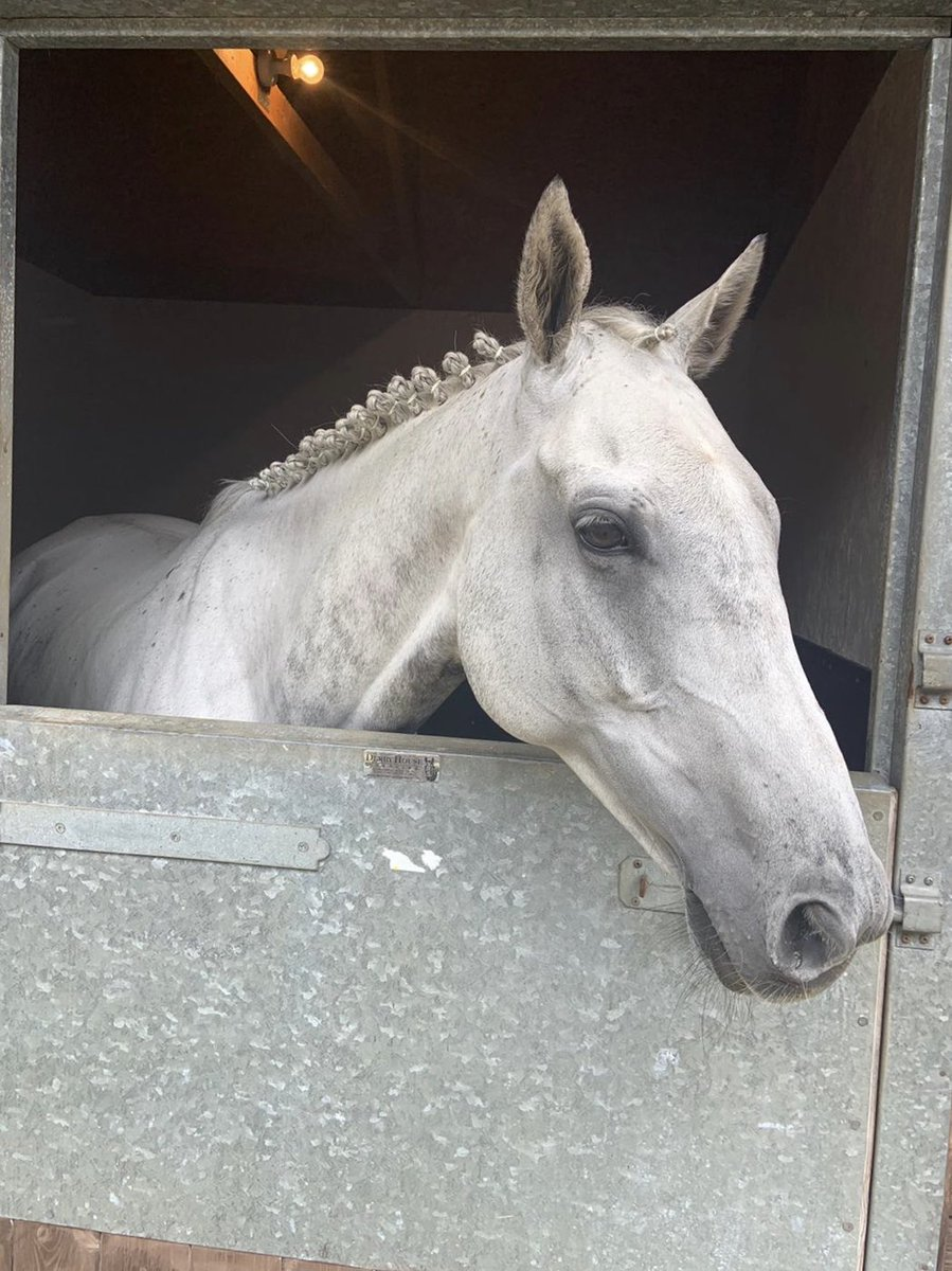 We're @HamiltonParkRC with 2 runners! The handsome Hillgrove Angel runs in the veterans race & Remmy D goes for the hopefully lucky last, @AndrewBrezz rides!