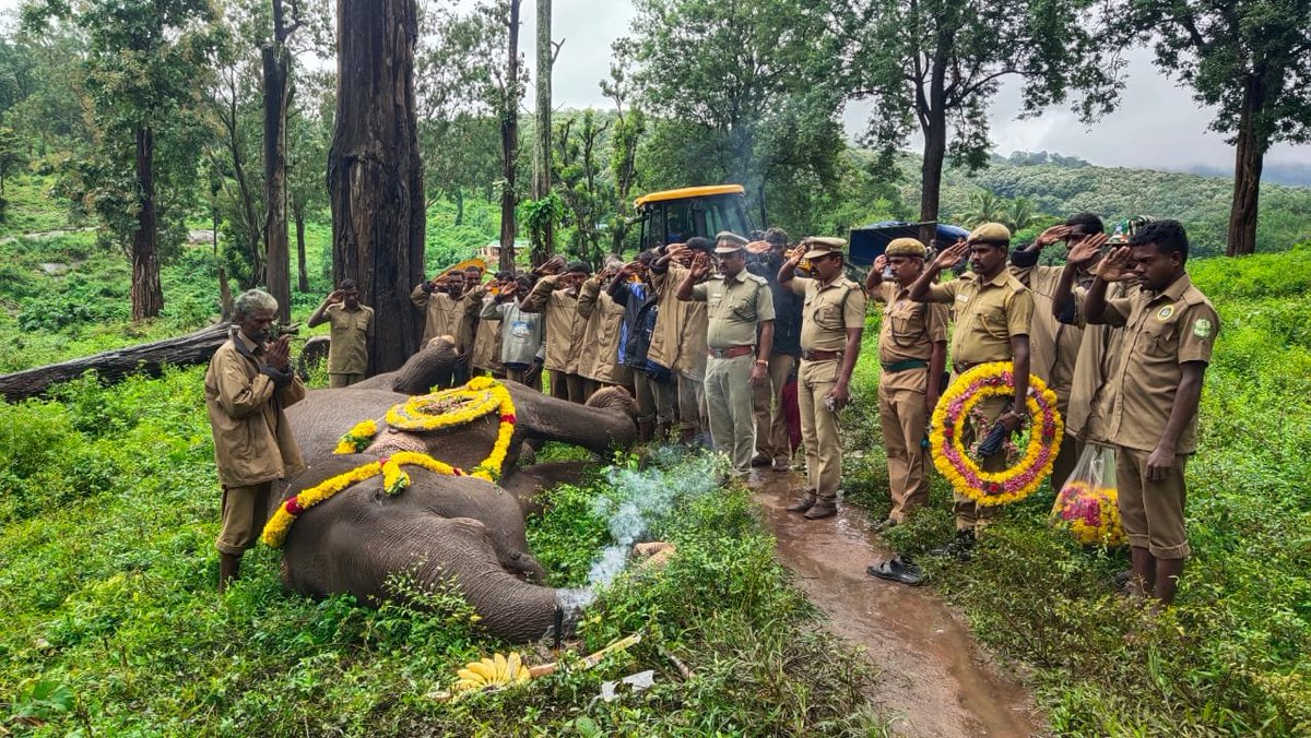 Tamil Nadu: A 41-year-old female elephant, Kalpana died at Kolikamuthi Elephant Camp at Top slip in Pollachi today. The elephant was ill since last two months. Forest officials and guards paid floral tribute to her. https://t.co/jL5yXry2Jm
