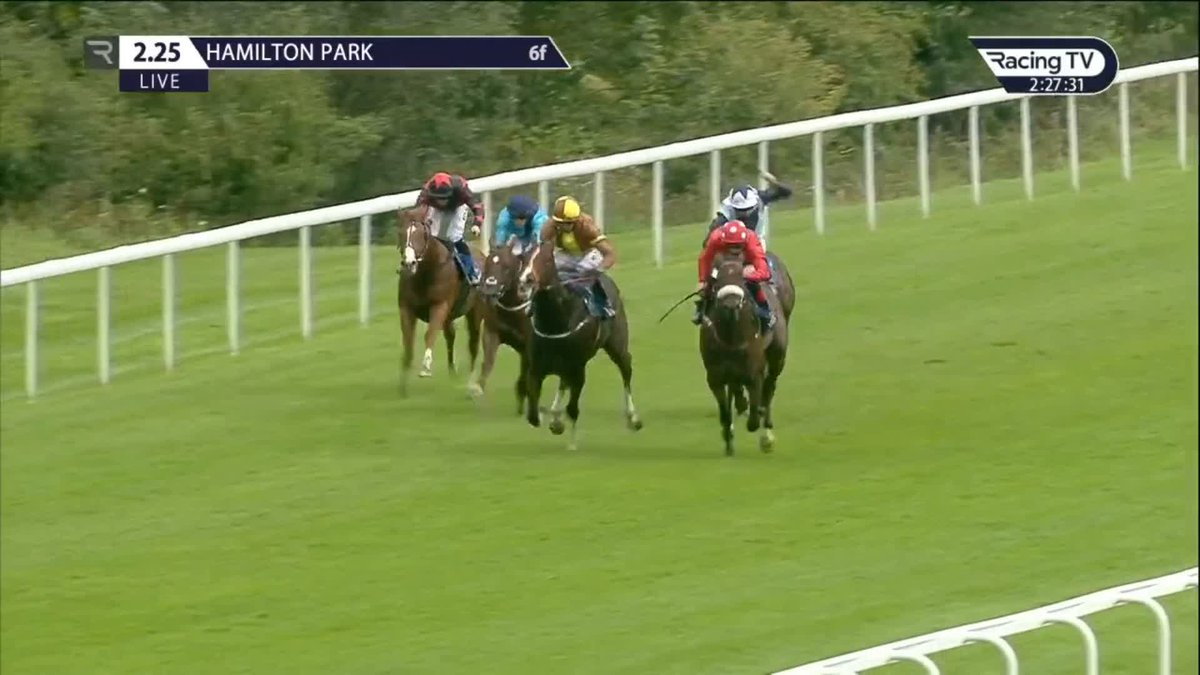 💪Smart performance📝 BLACKROD (Mayson) clears away from the field to win in impressive fashion @HamiltonParkRC for @mdodsracing & @CallumRodrigue4 on his 2nd start. He looks a promising sort for owner-breeder @SophieA_16💫