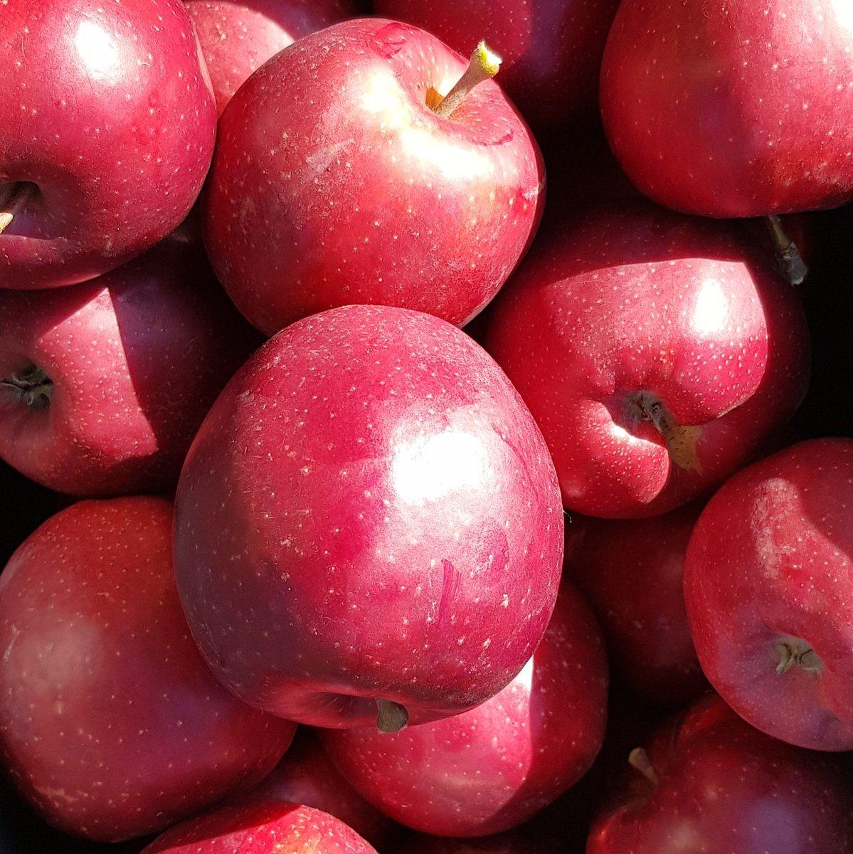Mooie oogst uit eigen tuin 👍 #appeltaart #appelcompôte #appelflappen https://t.co/InJ1vvuLE2