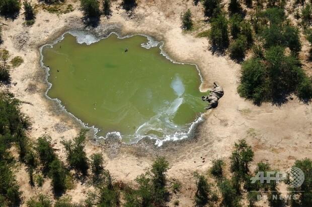 【約330頭】アフリカ南部ボツワナの謎のゾウ大量死、原因は細菌の毒素池や沼地、水飲み場で繁殖していたシアノバクテリアの毒素が原因。池や沼地の乾燥に伴い、今年6月末に収まったという。