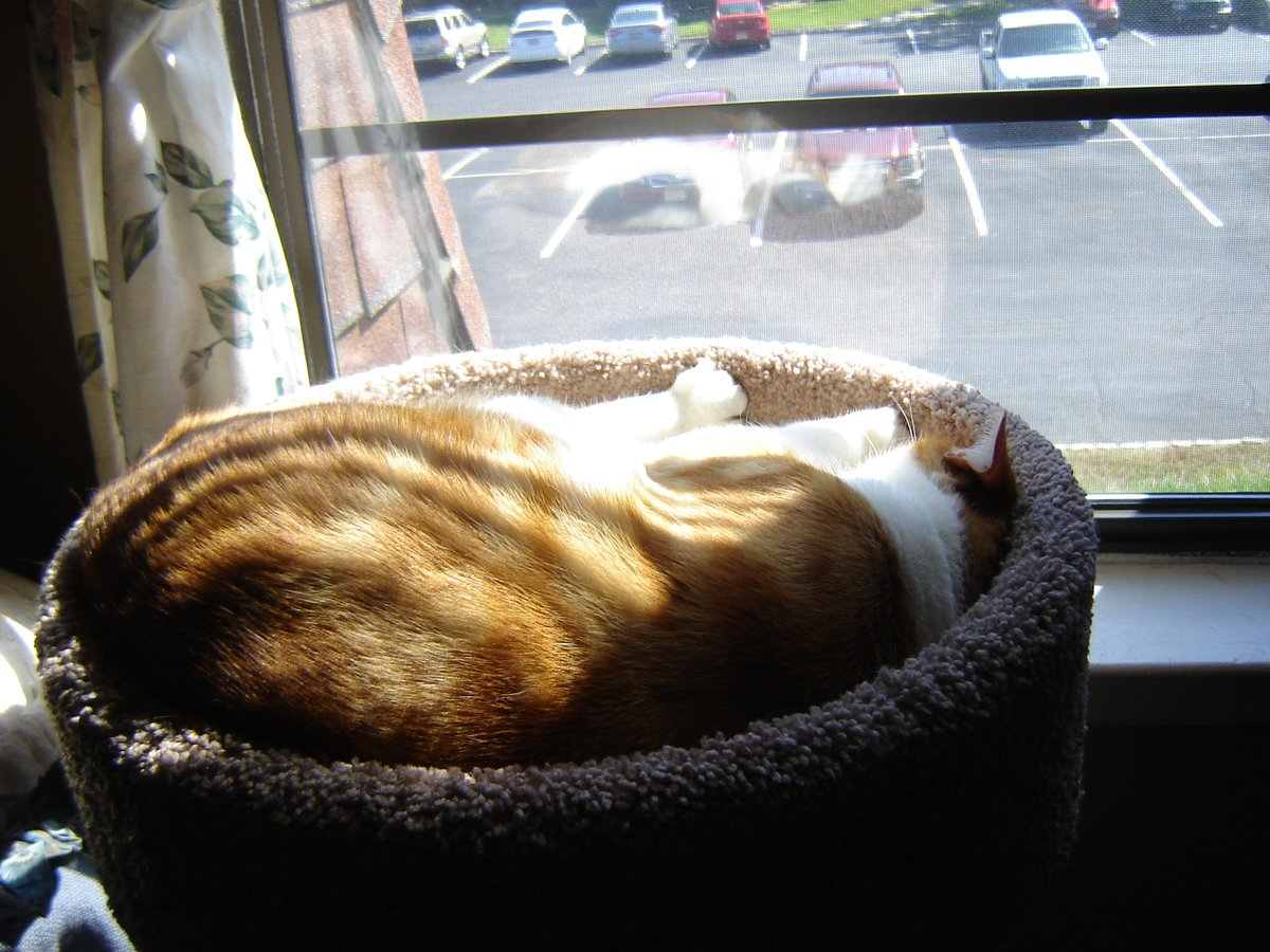 #ZSHQ @catsrule0 @parham1961 @dora_nlk @BloomNight2 @marisbellamy1 @LindsayPH @LBisaillon @vanessaandcats1 @Palmolive_S_Pan @GailCarangelo   @MauSupercat  Morning all, Today the right dayz to sleeps in dah sun in windowseat.   Ummm, nice and warm Hab good day all! https://t.co/gkZKg9daCd