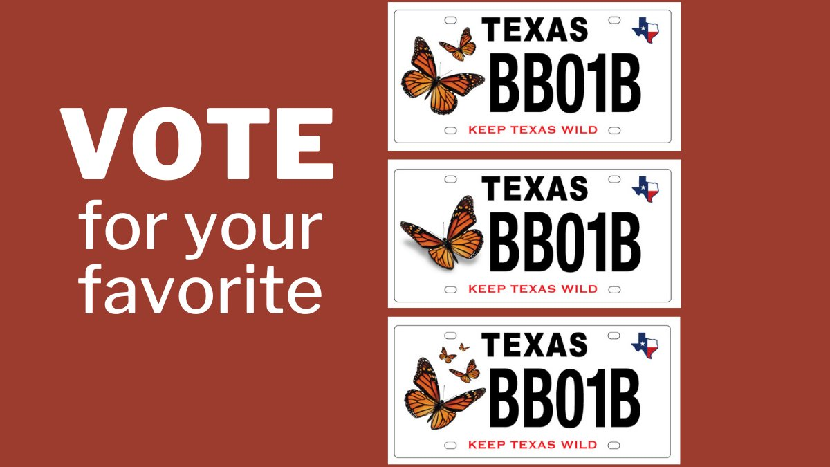 Take a moment to vote on which will be our newest Conservation License Plate to help #MonarchButterflies and other at-risk #Texas wildlife. Here's how to cast your vote: https://t.co/QMBX91mCgW  Lively debate is encouraged but keep it civil, folks. https://t.co/4jlxMFQs6d