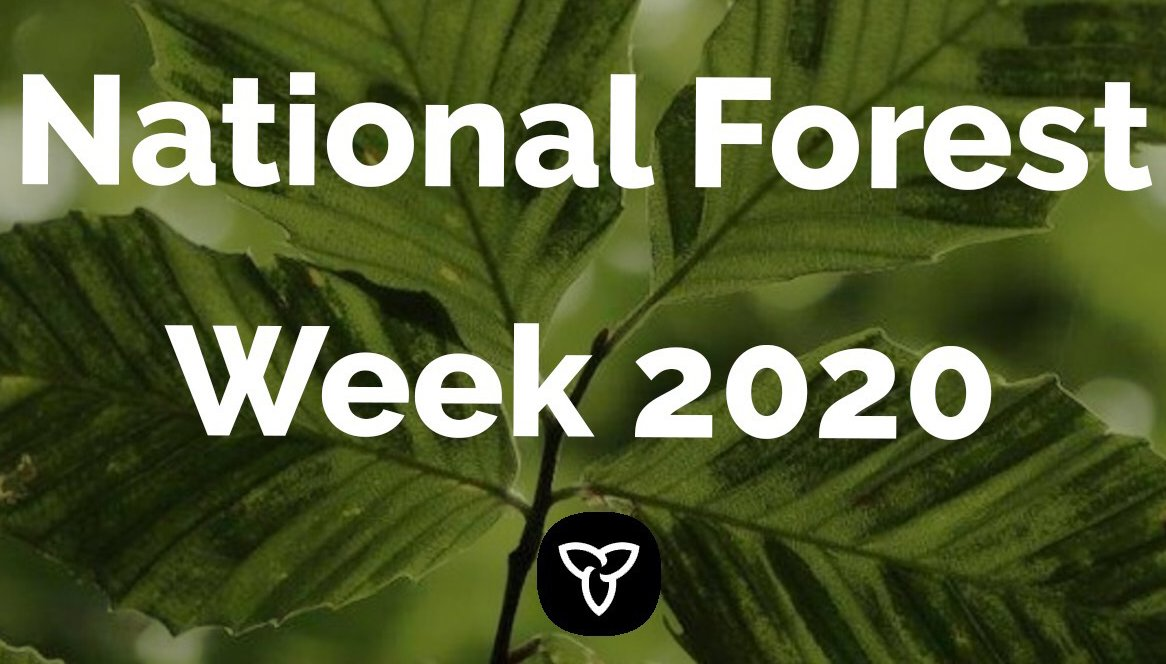 Happy #NationalForestWeek! Let's celebrate our rich forest heritage and the vital role the sector plays in our economy. The forest industry generates $18 billion in revenues and supports 147,000 jobs. Learn more: news.ontario.ca/en/statement/5…