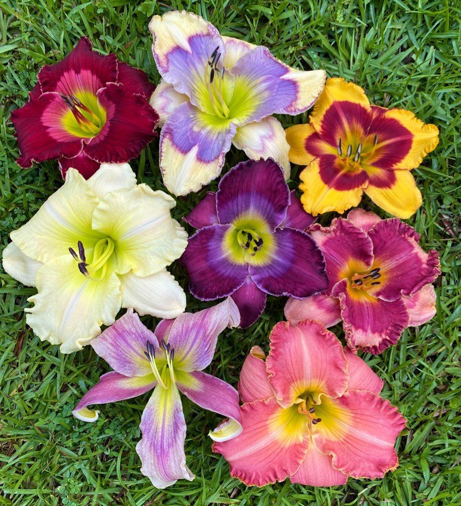 A few of my favorite flowers I grow :) #GardensHour https://t.co/9yr73kBUuU