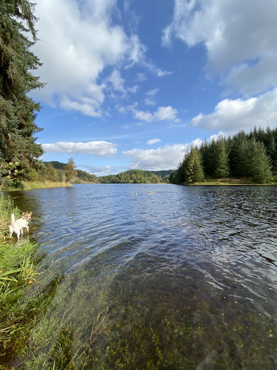 We had a glorious day in the homeland today #Scotland #discoverscotland #wildscotland #lochlife #wildswimming #dogslife #bliss #happyplace #labrador #swimmingterrier #swimmingdogs https://t.co/PpBaDVhRDh