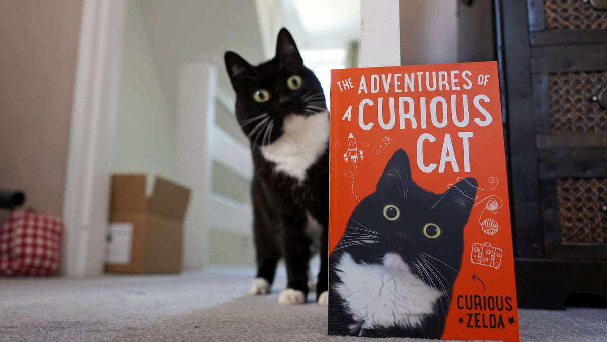 What is this curious arrival? 😻 Pre-order your Paperback today! https://t.co/dLJvt7XVEC https://t.co/E9uuphOKjD