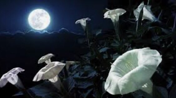 life #narrated  with thoughts  of you takes us  to the place where we lose all control  and the promise  of oneness  appears  in fallen dreams  somewhere between twilight and dawn digging deep into our souls  where I bloom  with the fullness of you  #vsspoem #moonmystic https://t.co/RESVjZgVvG