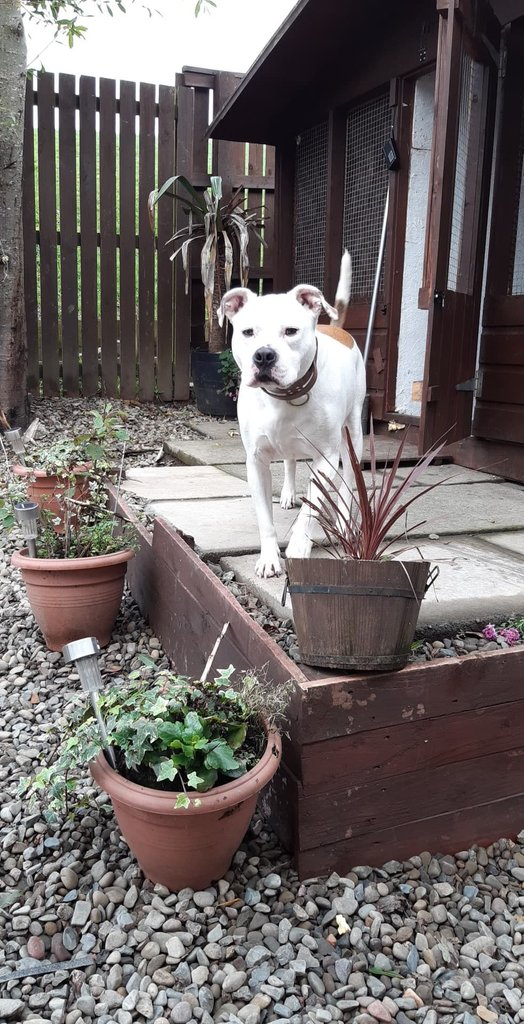 PLEASE ADOPT ME?  I am TONKA and  I'd like a rural home.  My details are here if you are interested.   https://t.co/kklHGeUrdP  Please RT https://t.co/HBwiuo06Md