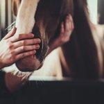 Image for the Tweet beginning: Los caballos domésticos no se