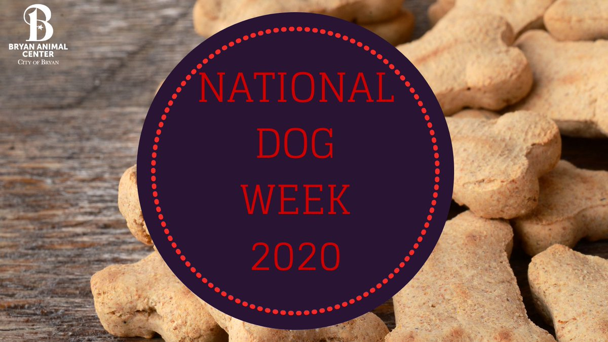 It's National Dog Week! Stay tune each day to learn more about a dog available for adoption at the Bryan Animal Center. #NationalDogWeek #BryanAnimalCenter #CityofBryan #AdoptADog #Adopt #Rescue #DogWeek #furryfriends  #DogsGiveKisses
