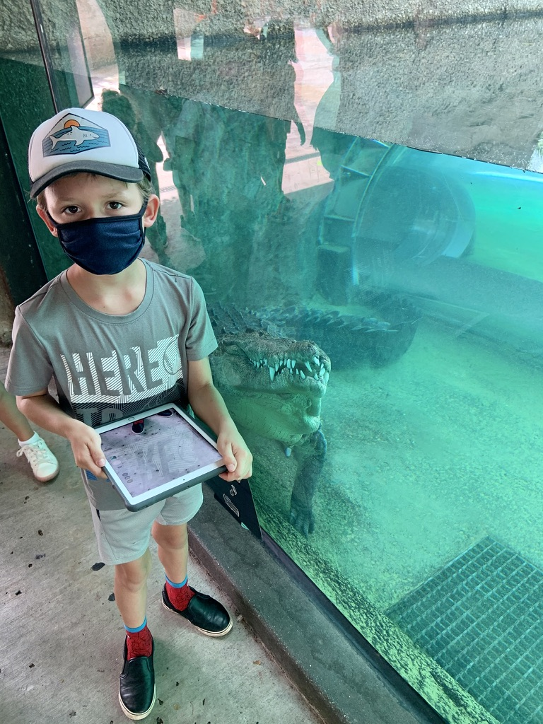 Sunday Funday @zoomiami and my son explaining how you can tell a crocodile from an alligator - It's all about the teeth you can see and the shape of the snout! This croc was definitely showing those chompers! #travel #nature #phenomenon #zoomiami #Miami https://t.co/7X4ohdRErt