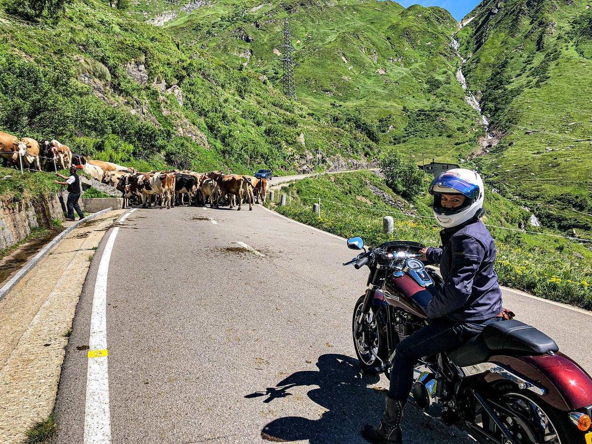 ¿Quién se siente identificad@ con esta escena? ¿Dónde habéis tenido que frenar para dejar pasar a las vacas?  #FindYourFreedom  #LiveYourLegend  #FreedomMachine #HarleyDavidson https://t.co/KN5E33sswj