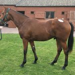 Lot 189 The Last Lion Colt purchased today @Tatts_ireland strong forward going yearling goes into training with @omeararacing limited shares available email simon@ontoawinner.net as we have limited shares remaining.