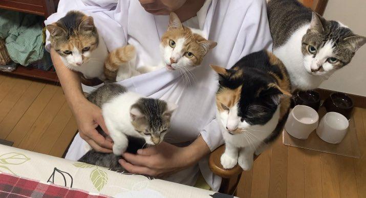 新しい動画です🙋♀️全のせ猫マシマシ(ちょっとだけよ)  @YouTubeより
