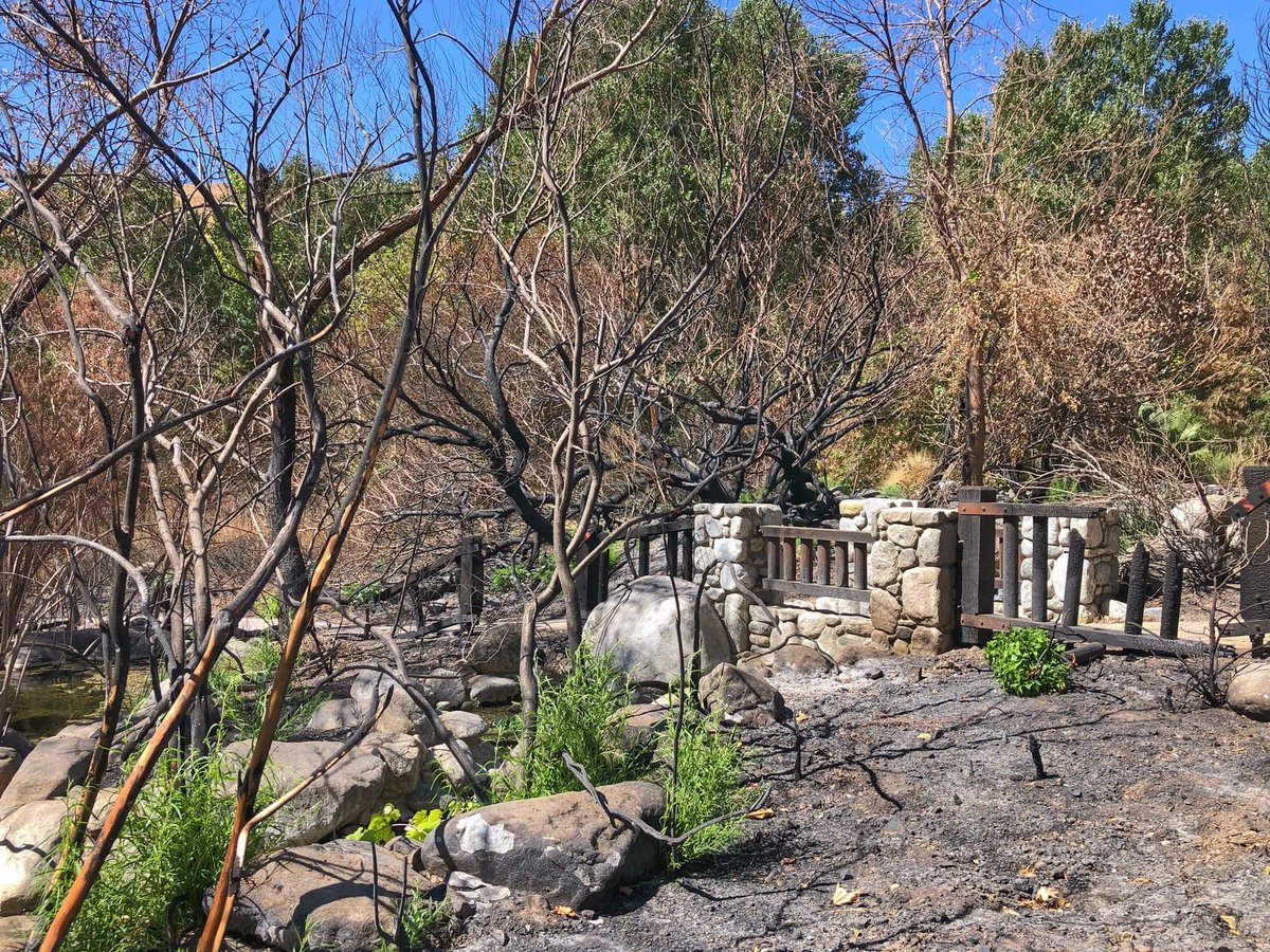 Whitewater Preserve needs your help to recover from the devastation caused by the Water Fire that swept through the Preserve on August 2, 2020  Your donation directly supports the recovery of wetland habitats, critical to endangered species  https://t.co/F2rZHAiINf. https://t.co/yCk9e2GneE