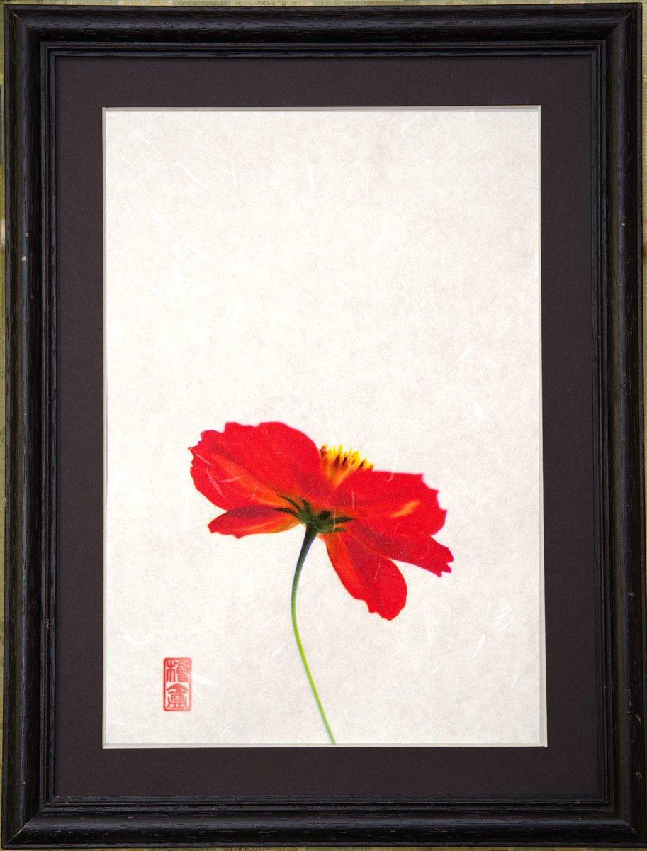 #散歩の途中 #Walk  #Flower I printed the flowers I found during the walk on Japanese paper. 散歩の途中で見つけた花を和紙にプリントしました。 https://t.co/U8CJjuMNpO