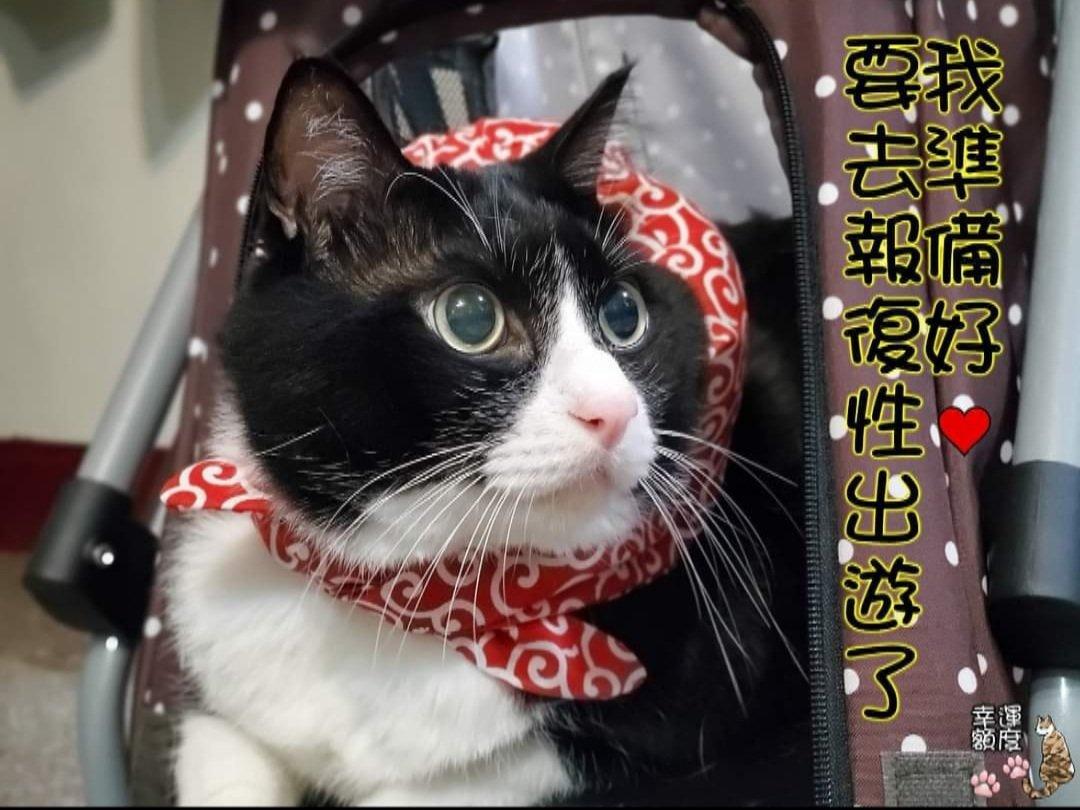 出発進行!! #幸運額度 #cat #taiwan #猫 #猫好きさんと繋がりたい #猫好き #猫写真 #猫のいる生活 #インスタ映え #貓 #台灣 #台湾 #REO #レオ #ハチワレ #ハチワレ猫 #賓士貓 #Tuxedo #雷歐 https://t.co/3V297m1PEn