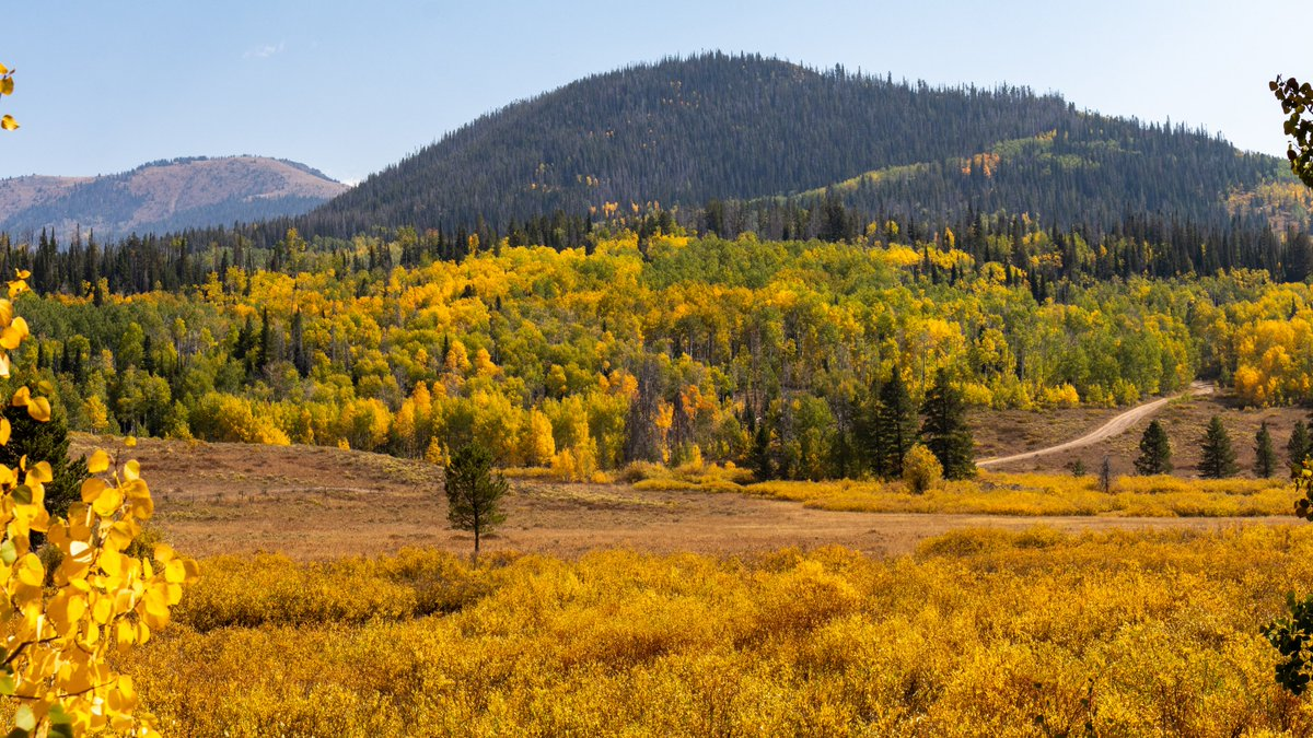 Fall is my favorite! The new season officially arrives at 7:31 am Tuesday. Colorado's colors are already going strong! These pics are from near Steamboat Springs and Pearl Lake. 😍😍😍 #cowx 📸John Varga https://t.co/Hdra0lUhrh