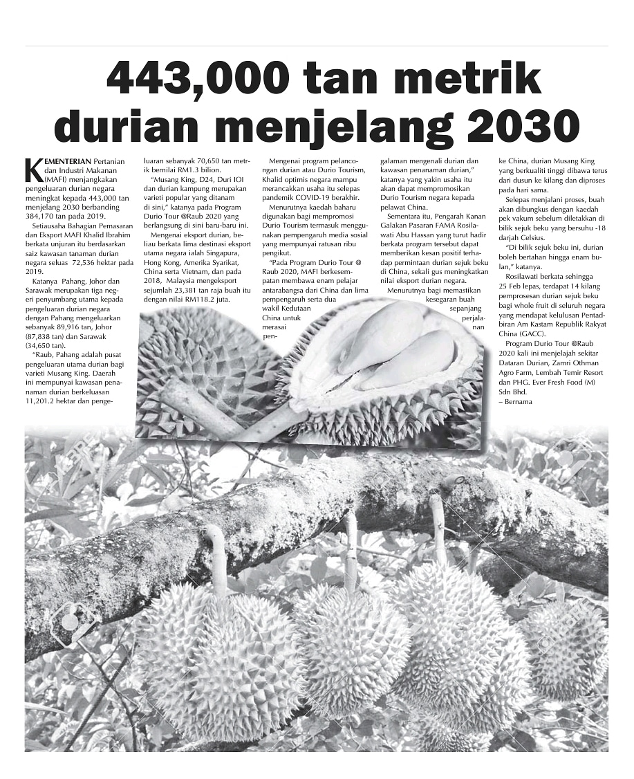 443,000 tan metrik durian menjelang 2030 - Utusan Sarawak   @MuhyiddinYassin @moamalaysia   #famadihatirakyat  #staysafe  #lindungidiridaripadacovid19 https://t.co/WiB6tuYwtP