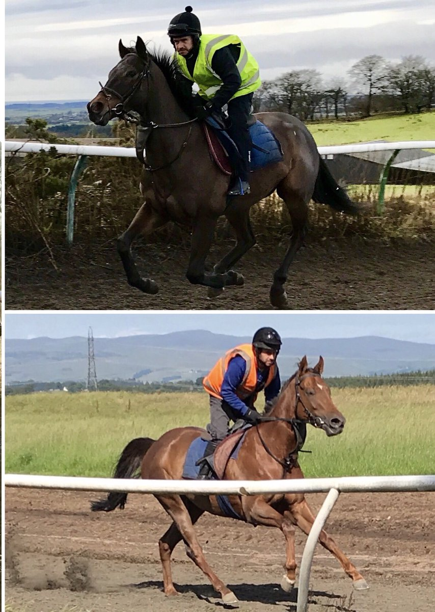 We 2 runners @NewcastleRaces this evening! Scots Sonnet(top)was a decent 3rd here last time & @JDeltaRacing's 4 time course winner Oriental Lilly loves the place, @311_mathers rides!