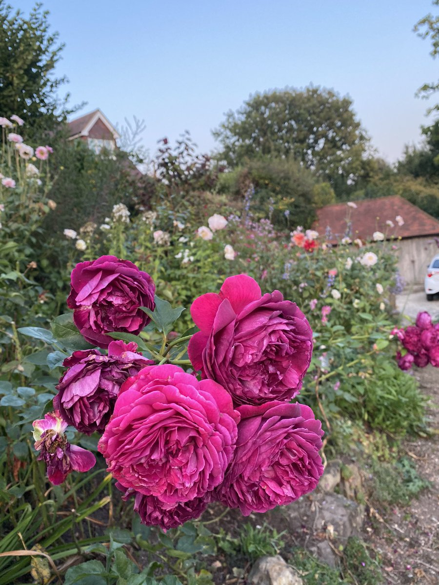 Good morning twitter friends. Think it's the last day of summer today. Can't complain it been a wonderful few weeks & we do need some rain. Have a pleasant day. Xx https://t.co/YuuA1akJ5y