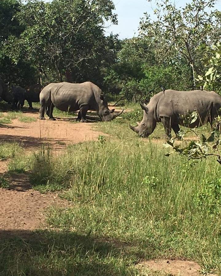 Happy Rhino Day. Visit the rhino sanctuary #zziwarhinosanctuary in Uganda on your way to #Murchisonfalls park at the #ziwarhinosanctuary #rhinoday #Uganda #Safaris #Holidays #Naturewalks #rhinotracking #Ugandawildlifesafaris #RhinoDay https://t.co/l1aS2VFVxA https://t.co/S4swTvM4i2