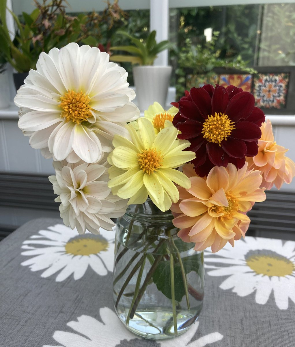 Have a wonderful day everyone. Lots of smiles ☺️ #DahliaLove from the garden 🌼🌿 https://t.co/1HNIIrNjuL