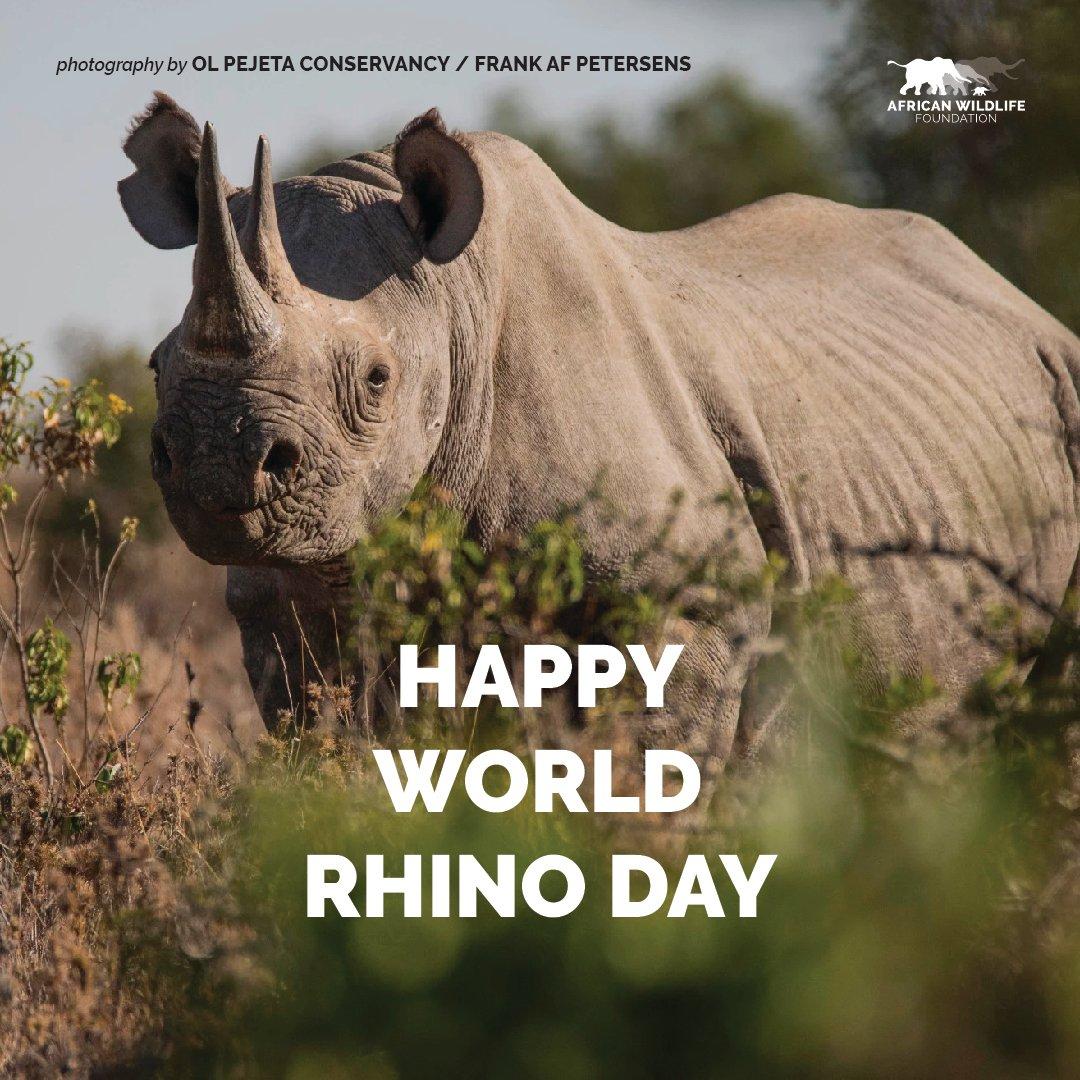Happy #WorldRhinoDay! https://t.co/6heFjxYsLV