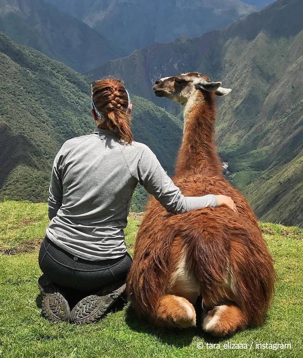 シルバーウィークは楽しめたけど、明日からまた現実に戻らなきゃね…😧  📷@tara_elizaaa  #Peru #ペルー #意外性大国ペルー #旅 #旅行 #おうち旅行 #エア旅行 #バケットリスト #旅好き #旅好きな人と繋がりたい #絶景 https://t.co/tQLnp2OJY4