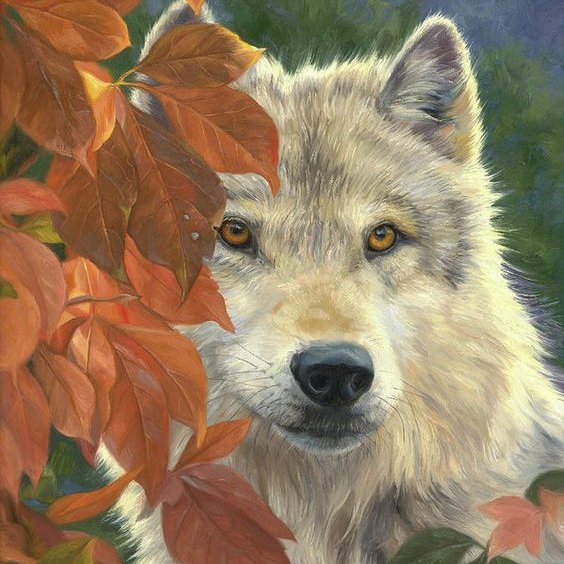 """""""The Beauty Of The Wolf"""" https://t.co/CpQTtyekhE"""