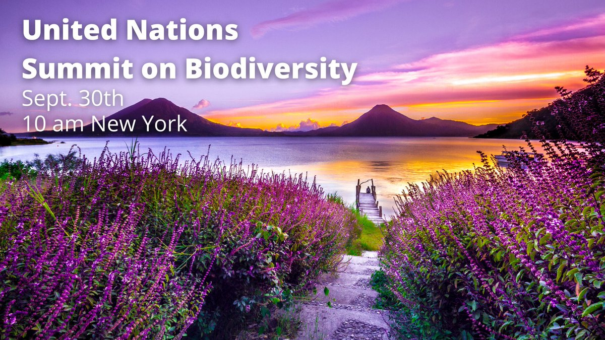 Save the date for the @UN Summit on #Biodiversity!  Theme: Urgent action on biodiversity for #sustainabledevelopment  'Responses to #COVID19 provide a unique opportunity for transformative change as a global community'  Live Sept 30th @ 10am NY / 4pm CEST https://t.co/viUbqrgUJy https://t.co/rIhCKppye8