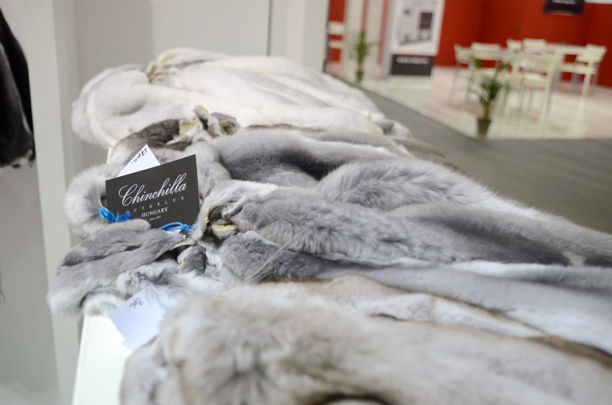 CHINCHILLA OCTOPLUS HUNGARY silky chinchilla collection at 5th edition of Fur Shopping Festival! #furshoppingfestival #furs #furfashion #fashion #fashioninsta #fashiondaily #tradefair #fair #aw20 #trends #fw #shopping #мех https://t.co/SzpyLVXOaE