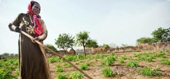 Displaced woman raped, killed in Central #Darfur, #Sudan, #SudanNews https://t.co/wTjcjpLiXW https://t.co/dD7NEBoHpA