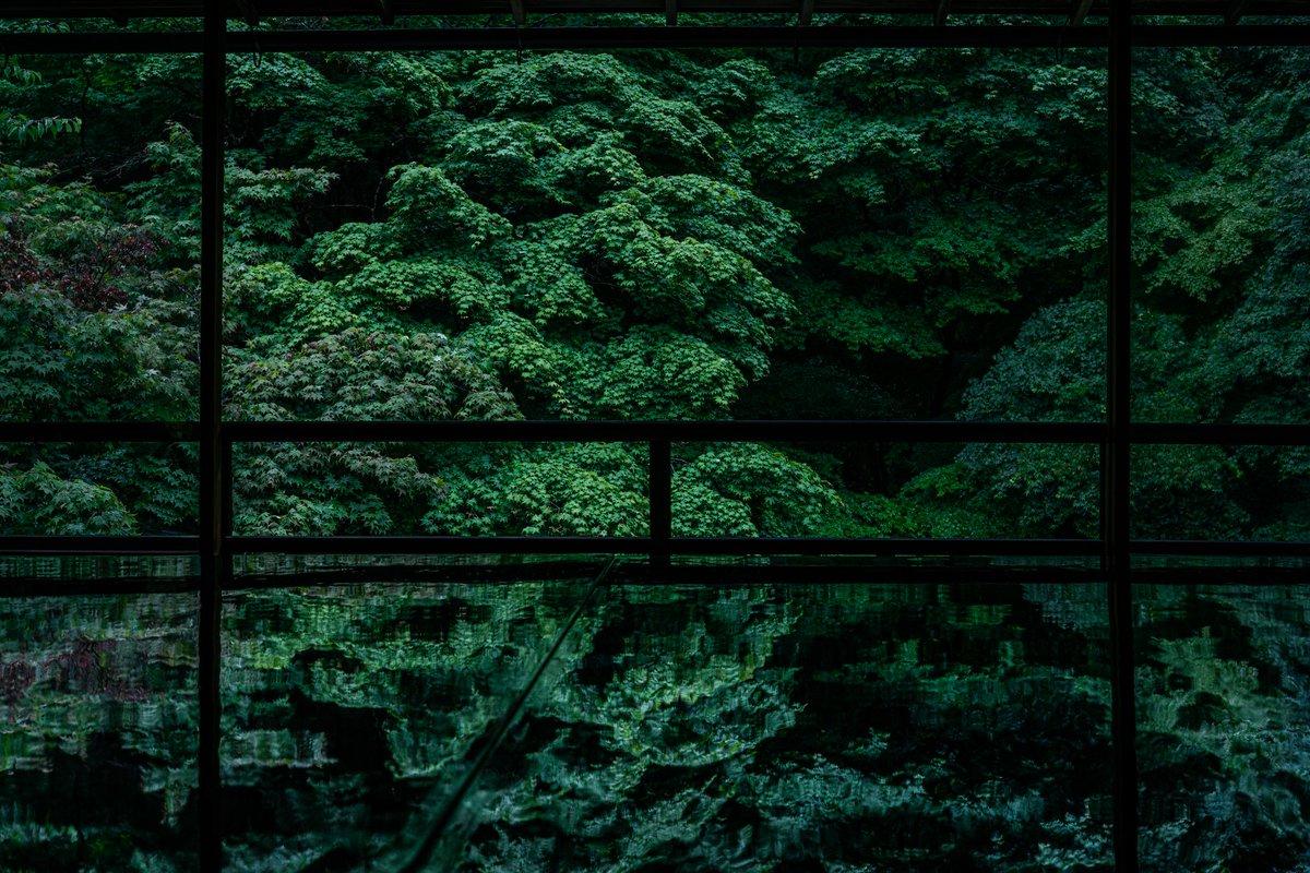 私が写す緑の世界を楽しんで欲しい。