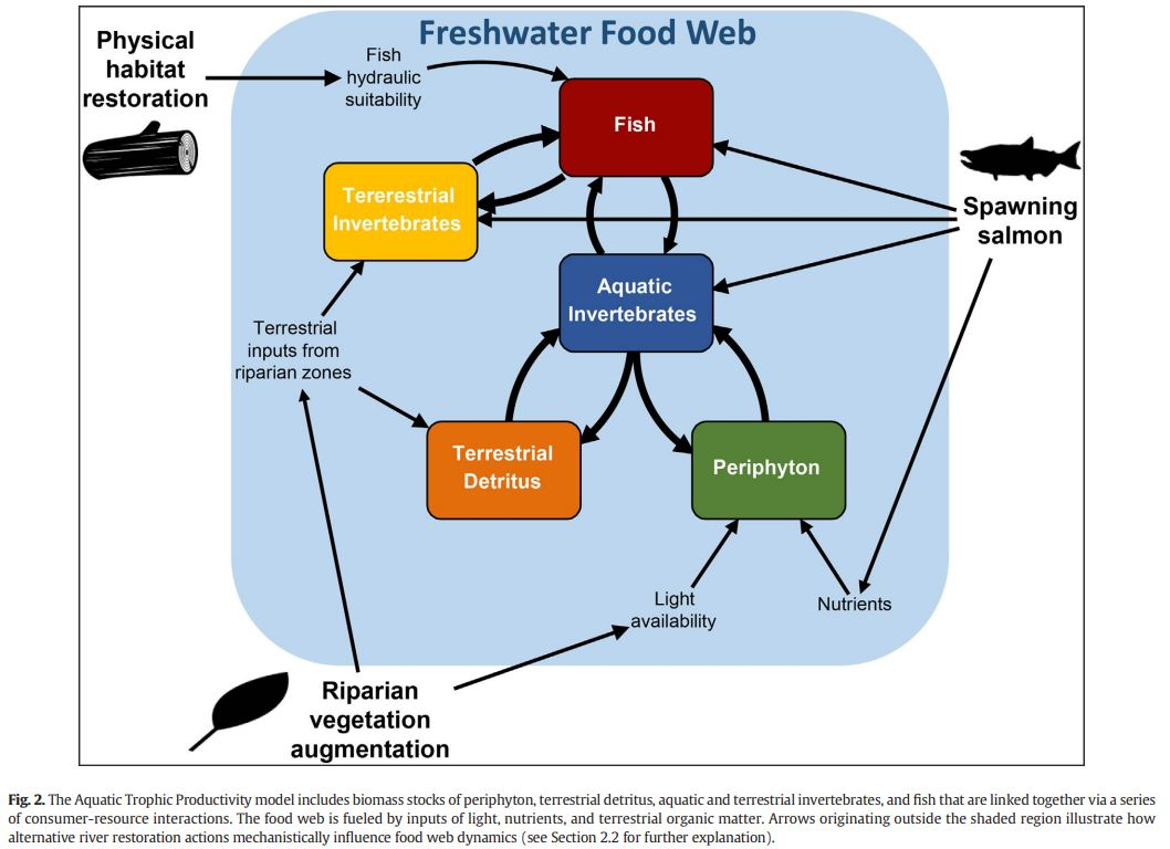 Food web structure, nutrient availability + water temp mediate habitat restoration outcomes for #salmon bearing streams   Complex multi-species food webs reduced fish biomass response to restoration  #fishsci @AK_CoastRainCtr @uasoutheast @ForestServiceNW https://t.co/BbvMGPvhDW https://t.co/K982GRAYgm