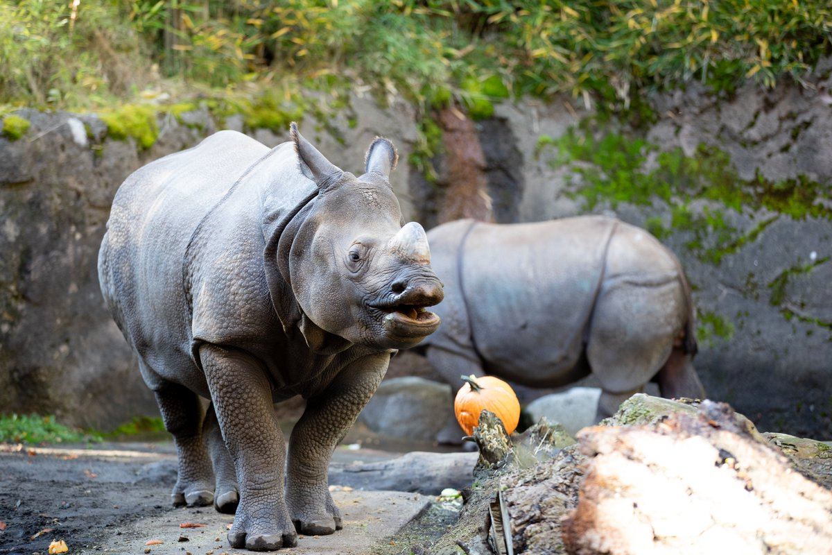 Hello Gourd-eous!  When 70% of Washington voters approved the nation's first citizen-led ban on wildlife trafficking, you took a stand for rhinos. Continue to advocate for these incredible animals by speaking up for species. Learn more at https://t.co/nTO16YPIb4 https://t.co/1eDqQ1Hzor