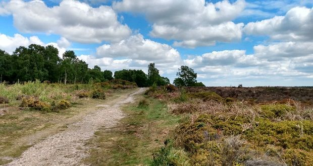 £7.8m of housebuilders' money earmarked for protecting Cannock Chase's landscape and wildlife while maintaining open access https://t.co/ywedMqNqMI  @StaffsWildlife @cannockAONB @ForestryEngland @RSPBEngland @Lichfield_DC @Staffordbc @south_staffs @WalsallCouncil @nationaltrust https://t.co/Ag3E4G1JlP
