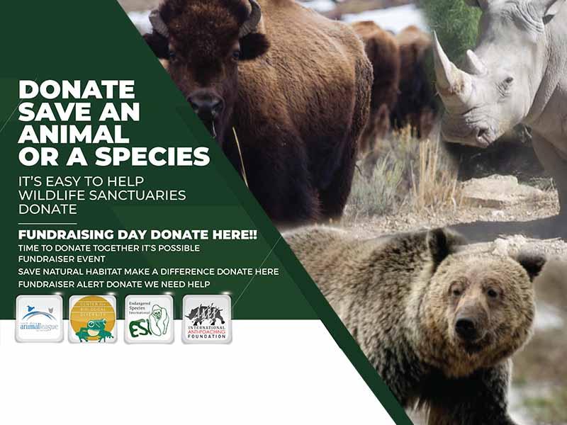 Adopt or support Wildlife Sanctuaries | #wildlifesafari #safari #wildlife_aroundworld  #WorldWildlifeDay  https://t.co/N7e4kjCgxN https://t.co/OkOSHezCux