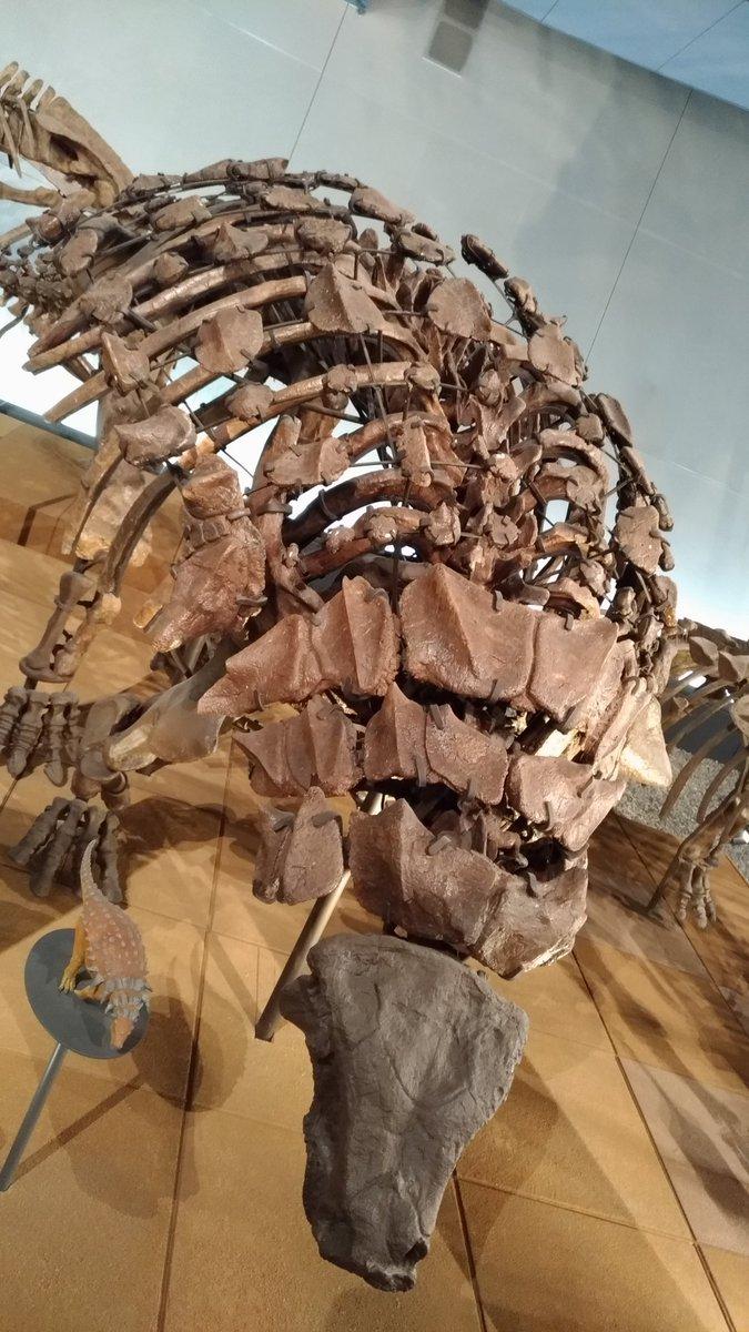 """さのっち on Twitter: """"エドモントニアの1種 ノドサウルス科の恐竜で ..."""