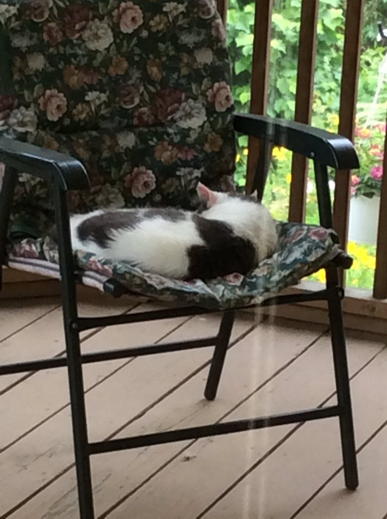 "❤️Tuna Tuesday's Midwest report:  Things are quiet, overcast, 60's with a breeze.  I'm napping on the back porch. Somebody mention ""doing my nails"" this morning, so I'm ""distancing"" from ALL of them! @PincyCat @LordGraydon @JoyOfCats @Me_Me_cat @nelliedekat @Cleo_sMommy https://t.co/kBp2Ms0f5L"